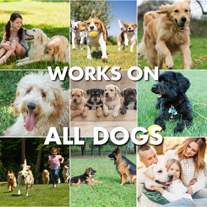 works-on-all-dogs
