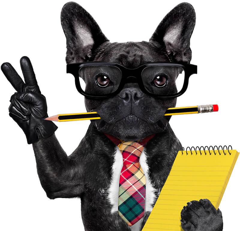 dog-training